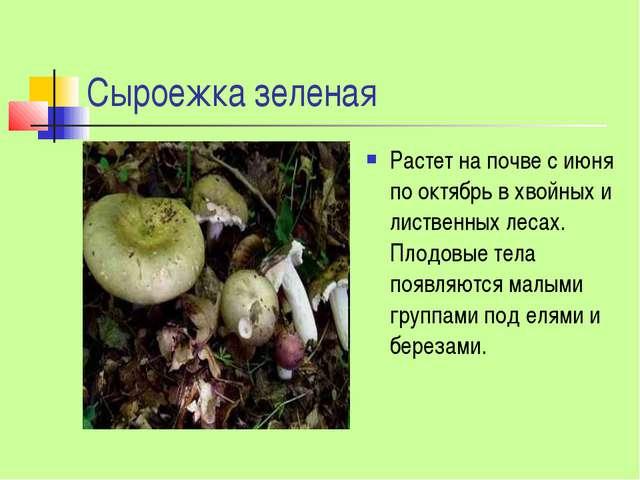Сыроежка зеленая Растет на почве с июня по октябрь в хвойных и лиственных лес...