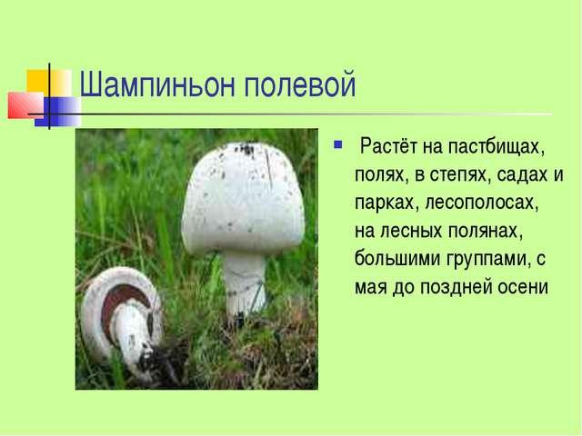 Шампиньон полевой Растёт на пастбищах, полях, в степях, садах и парках, лесоп...
