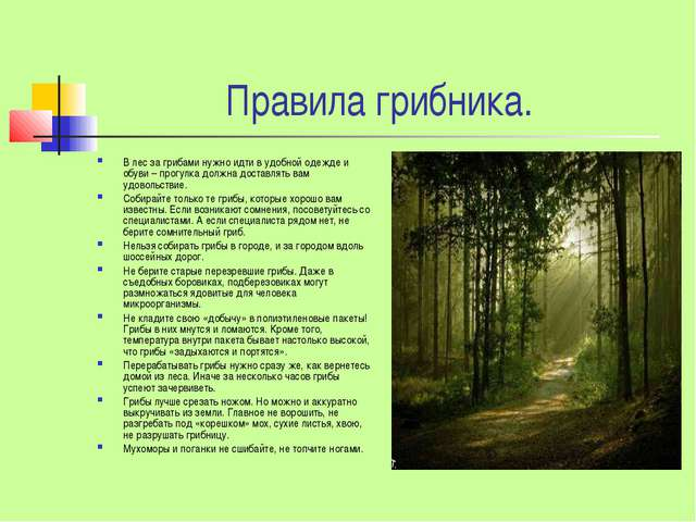 Правила грибника. В лес за грибами нужно идти в удобной одежде и обуви – прог...