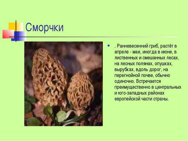 Сморчки . Ранневесенний гриб, растёт в апреле - мае, иногда в июне, в листвен...
