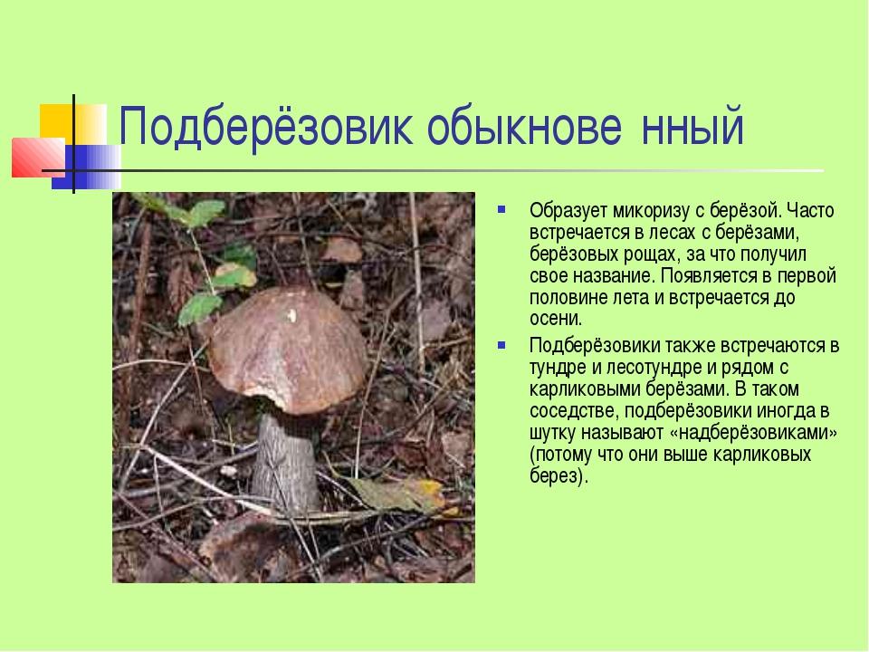 Подберёзовик обыкнове́нный Образует микоризу с берёзой. Часто встречается в л...