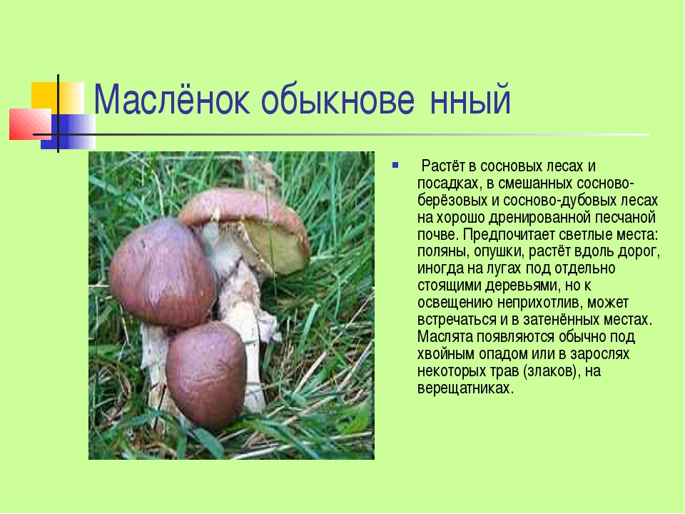 Маслёнок обыкнове́нный Растёт в сосновых лесах и посадках, в смешанных соснов...