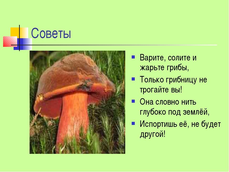 Советы Варите, солите и жарьте грибы, Только грибницу не трогайте вы! Она сло...