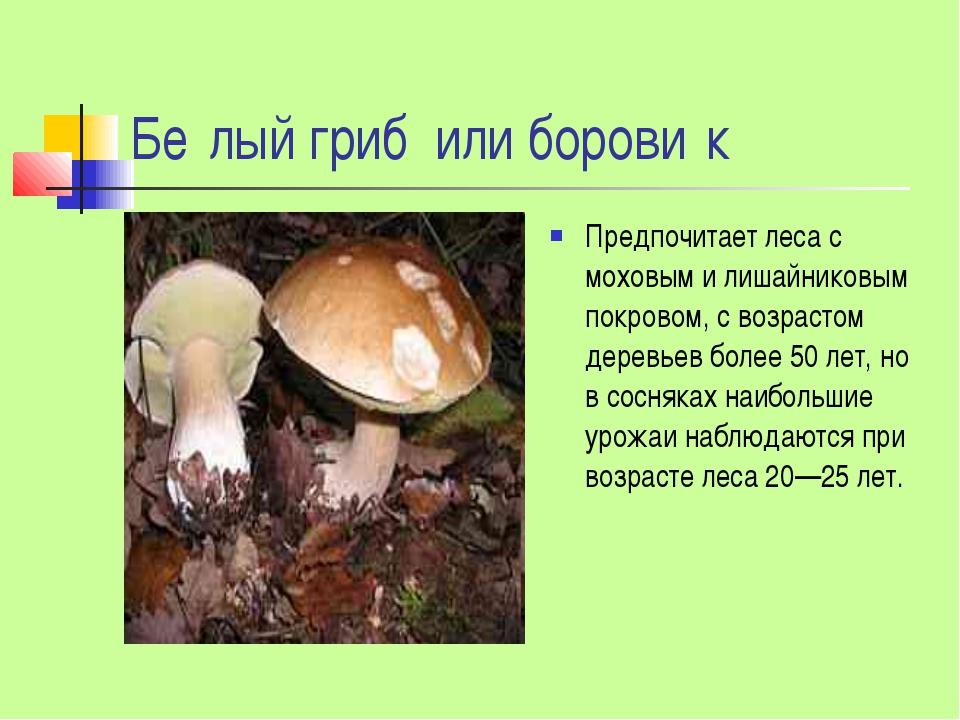 Бе́лый гриб или борови́к Предпочитает леса с моховым и лишайниковым покровом,...