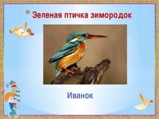 Зеленая птичка зимородок Иванок