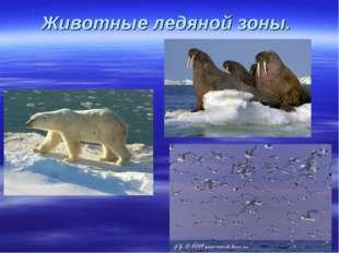 Животные ледяной зоны.