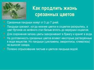 Как продлить жизнь срезанных цветов Срезанные ландыши живут от 3 до 7 дней. Л