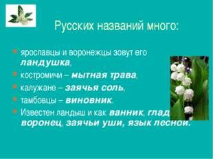 Русских названий много: ярославцы и воронежцы зовут его ландушка, костромичи