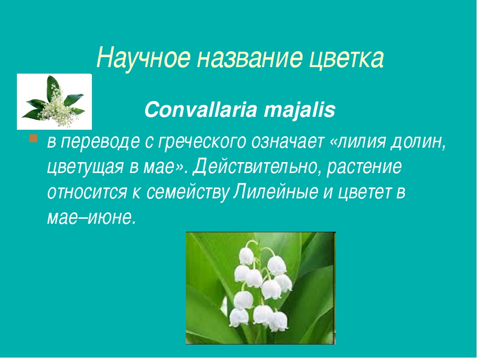 Научное название цветка Convallaria majalis в переводе с греческого означает...