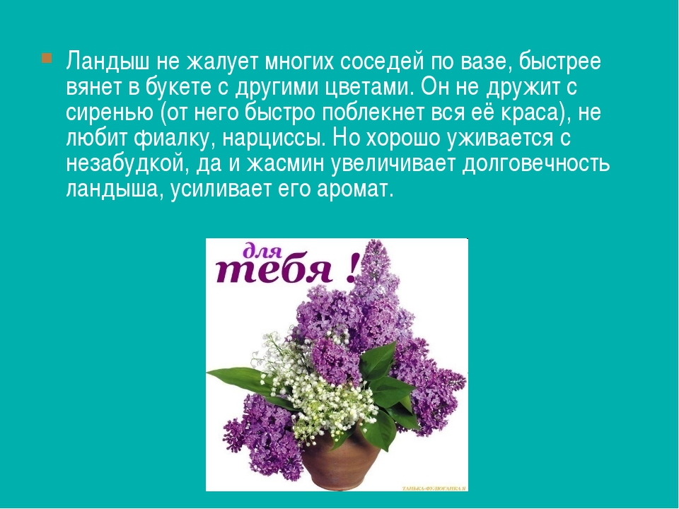 Ландыш не жалует многих соседей по вазе, быстрее вянет в букете с другими цве...