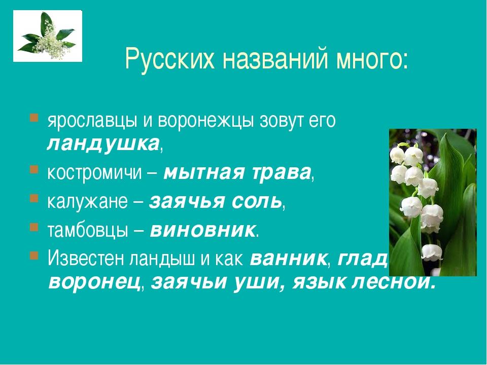 Русских названий много: ярославцы и воронежцы зовут его ландушка, костромичи...