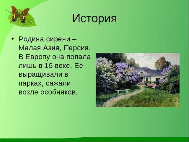 История Родина сирени – Малая Азия, Персия. В Европу она попала лишь в 16 век...