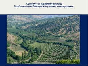 В долинах у гор выращивают виноград. Под Судаком очень благоприятные условия
