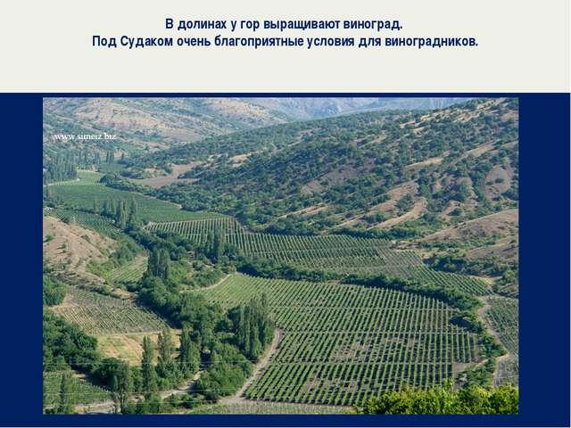 В долинах у гор выращивают виноград. Под Судаком очень благоприятные условия...