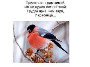 Прилетают к нам зимой, Им не нужен летний зной. Грудка ярче, чем заря, У кра