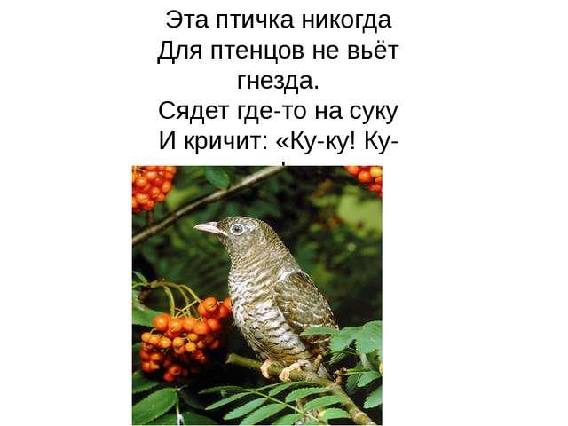 Эта птичка никогда Для птенцов не вьёт гнезда. Сядет где-то на суку И кричит:...