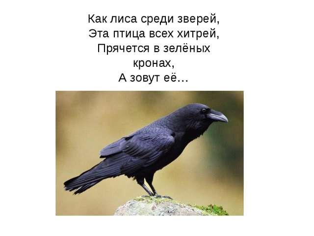 Как лиса среди зверей, Эта птица всех хитрей, Прячется в зелёных кронах, А зо...