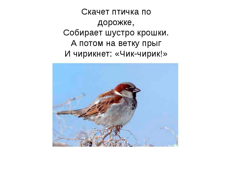Скачет птичка по дорожке, Собирает шустро крошки. А потом на ветку прыг И чир...