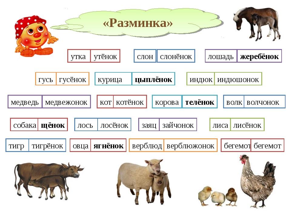 «Разминка» утка утёнок слон слонёнок лошадь жеребёнок гусь гусёнок индюк инд...
