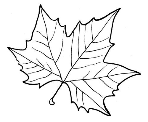 трафареты листьев деревьев для вырезания Сделай сам