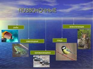 ПОЗВОНОЧНЫЕ птицы земноводные пресмыкающиеся млекопитающие рыбы