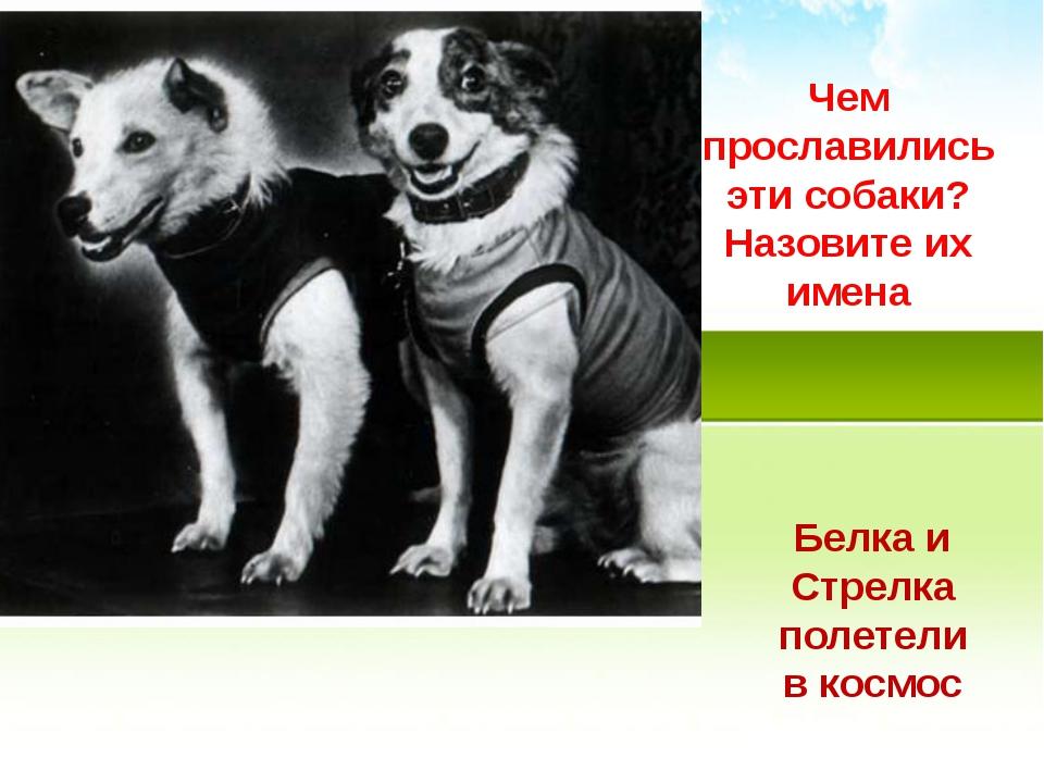 Чем прославились эти собаки? Назовите их имена Белка и Стрелка полетели в кос...