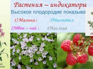 Растения – индикаторы Высокое плодородие показывают: 1) Малина ; 3)Чистотел