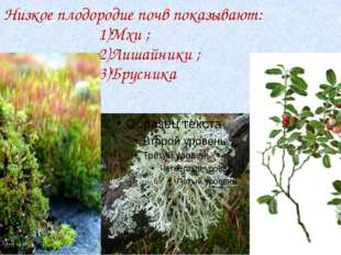 Низкое плодородие почв показывают: 1)Мхи ; 2)Лишайники ; 3)Брусника