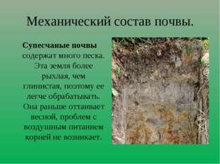 Механический состав почвы. Супесчаные почвы содержат много песка. Эта земля б