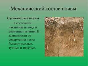 Механический состав почвы. Суглинистые почвы в состоянии накапливать воду и э