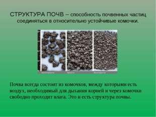 Почва всегда состоит из комочков, между которыми есть воздух, необходимый дл