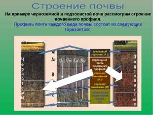 На примере черноземной и подзолистой почв рассмотрим строение почвенного проф