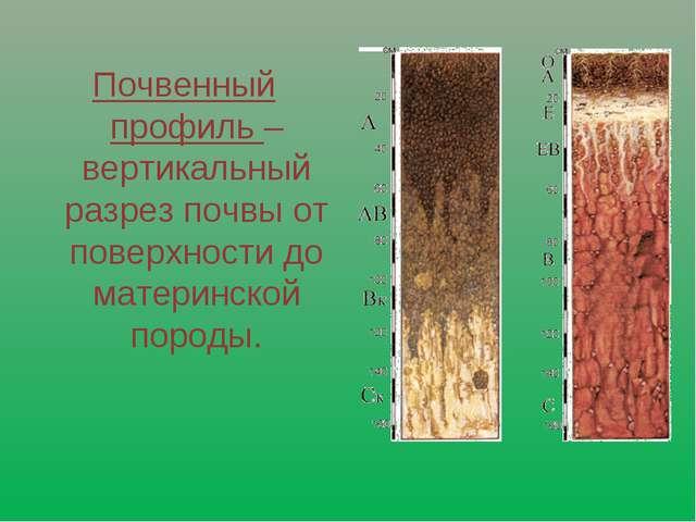Почвенный профиль – вертикальный разрез почвы от поверхности до материнской п...