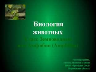 Биология животных Класс Земноводные, или Амфибии (Amphibia) Пономарева И.П.,