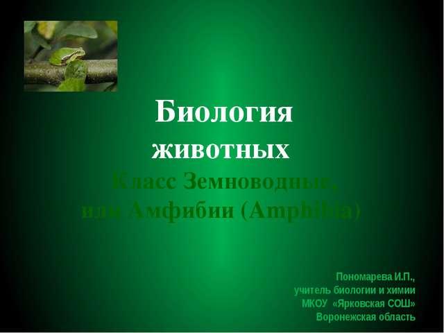Биология животных Класс Земноводные, или Амфибии (Amphibia) Пономарева И.П.,...