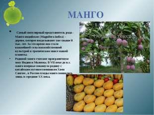 МАНГО Самый популярный представитель рода - Манго индийское (Magnifera indica