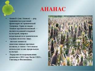 АНАНАС Анана́с (лат. Ananas) — род травянистых растений происходят из тропиче