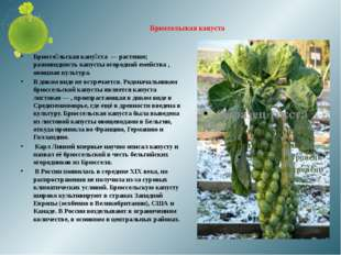 Брюссельская капуста Брюссе́льская капу́ста — растение; разновидность капусты
