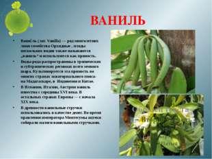 ВАНИЛЬ Вани́ль (лат. Vanílla) — род многолетних лиан семейства Орхидные , пло