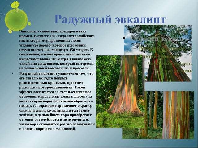 Радужный эвкалипт Эвкалипт - самое высокое дерево всех времен. В отчете 1872...