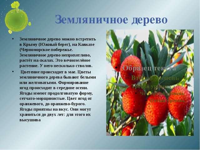 Земляничное дерево Земляничное дерево можно встретить в Крыму (Южный берег),...