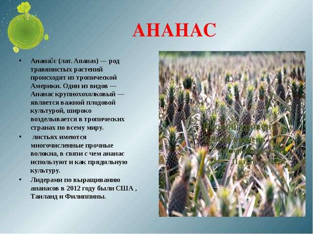 АНАНАС Анана́с (лат. Ananas) — род травянистых растений происходят из тропиче...