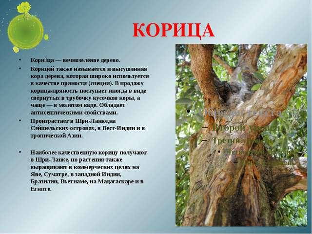 КОРИЦА Кори́ца — вечнозелёное дерево. Корицей также называется и высушенная к...