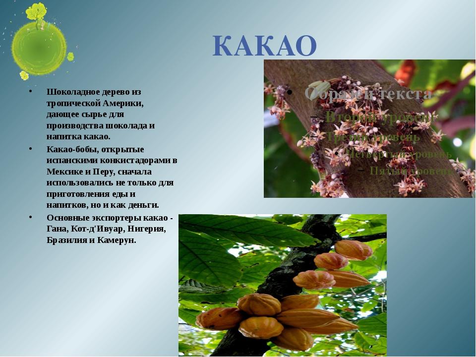 КАКАО Шоколадное дерево из тропической Америки, дающее сырье для производства...