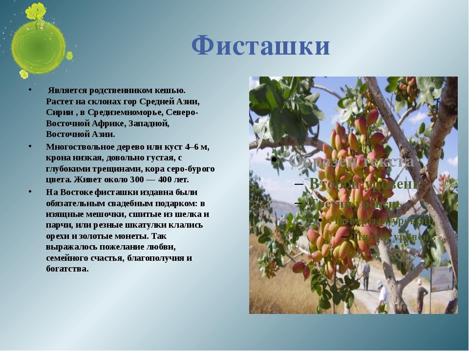 Фисташки Является родственником кешью. Растет на склонах гор Средней Азии, Си...