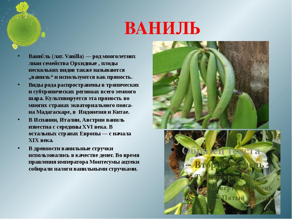 ВАНИЛЬ Вани́ль (лат. Vanílla) — род многолетних лиан семейства Орхидные , пло...