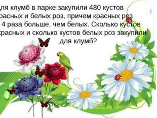 Для клумб в парке закупили 480 кустов красных и белых роз, причем красных роз