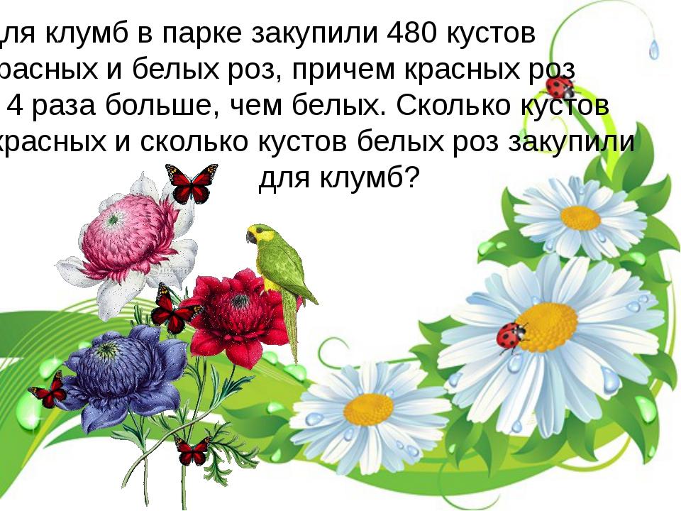 Для клумб в парке закупили 480 кустов красных и белых роз, причем красных роз...