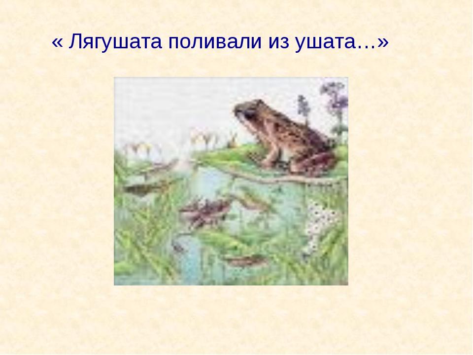 « Лягушата поливали из ушата…»