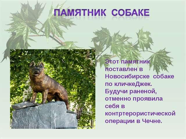Этот памятник поставлен в Новосибирске собаке по кличкеДжек. Будучи раненой,...